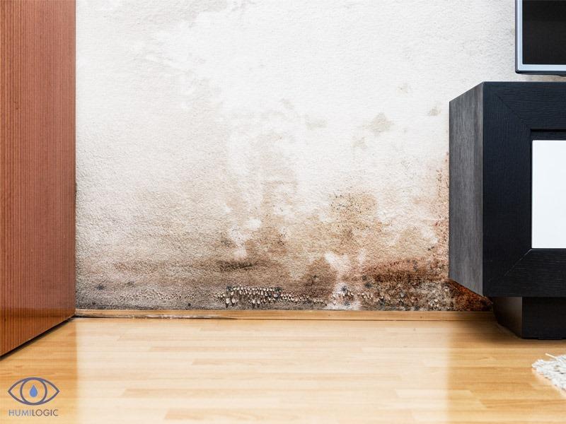 Eliminar el moho negro de las paredes.