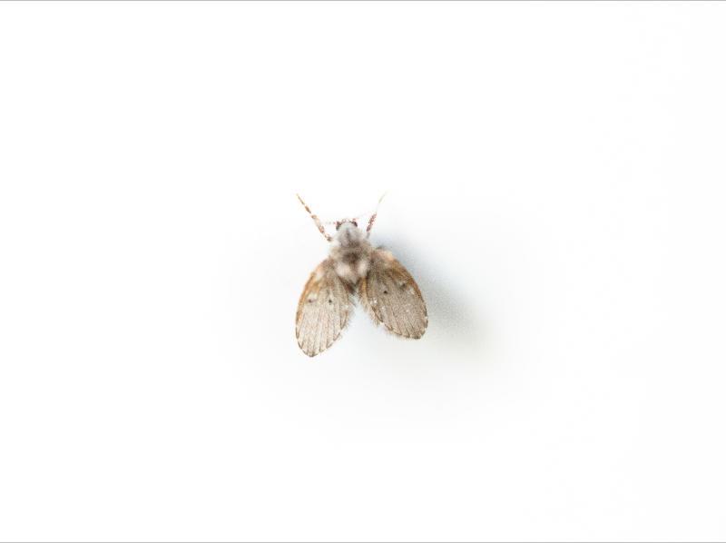 Cómo eliminar las moscas de la humedad