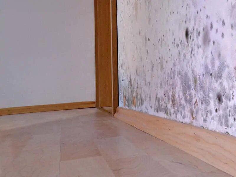 Insectos en casa por la humedad