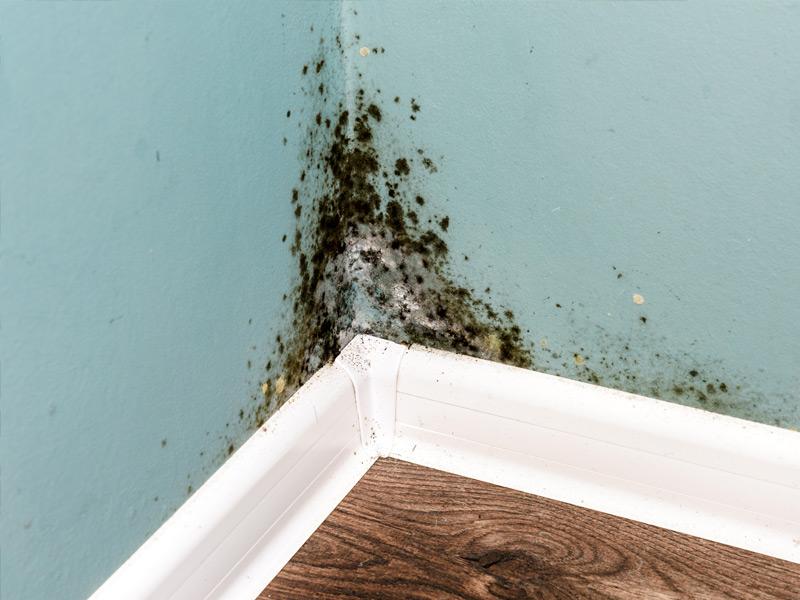Cómo eliminar la humedad de las paredes